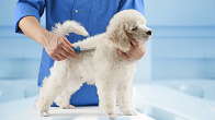 Pet Grooming in Pendleton Oregon